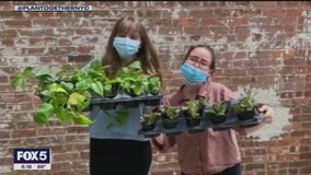 Brooklyn women use plants to reach out to seniors across NYC