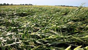 Storm damaged up to 10 million acres of Iowa farmland