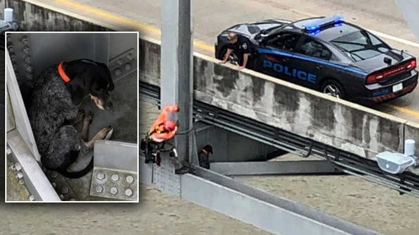 Stranded dog rescued from bridge 120 feet above Mississippi River
