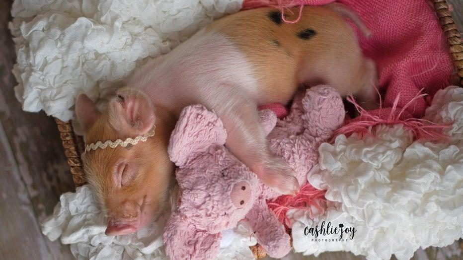 piggy6.jpg