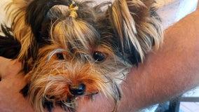 Dog dies at JFK Airport sparking legal battle
