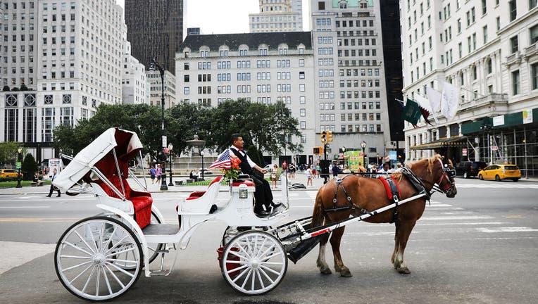 A carraige horse and driver in Manhattan.
