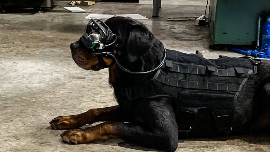Augmented reality goggles can allow a dog's handler to give it specific directional commands.