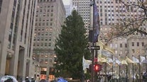 Rockefeller tree rules