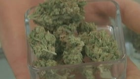 New Jersey voters approve recreational marijuana use