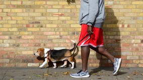 Dog owners who walk pet at higher risk of contracting COVID, study finds