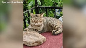 Burnet couple's cat travels 228 miles home from Dallas-area ranch