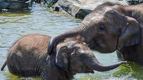 Baby elephant at zoo in Syracuse dies suddenly