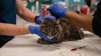Biotech companies working on a COVID-19 vaccine for cats