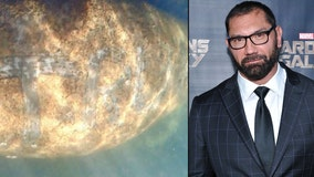 Dave Bautista offers $20K reward to find person who wrote 'TRUMP' on Florida manatee