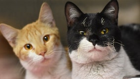 More than 90 cats survive NY house fire