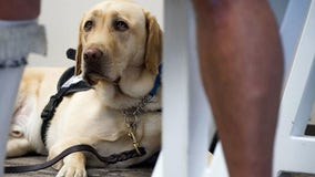 American Airlines banning emotional-support animals on flights