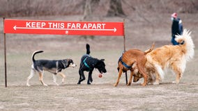 With pandemic puppies abounding, experts share dog park tips