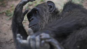 Animals at primate sanctuary freeze to death amid Texas power outage