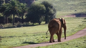 Elephant kills zookeeper with blow from trunk