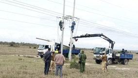 2 giraffes electrocuted by power lines in Kenya park
