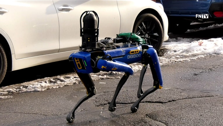 A blue and black robotic dog walks past vehicles on a street