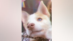 Cops: Long Island dog-sitter abandoned puppy in dumpster