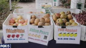 Farmlink Project fights rising food insecurity amid pandemic