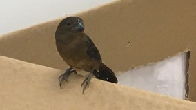 More live finches found in luggage at JFK Airport