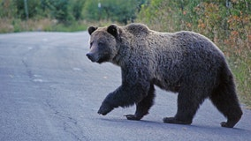 Man killed by grizzly bear near Yellowstone National Park