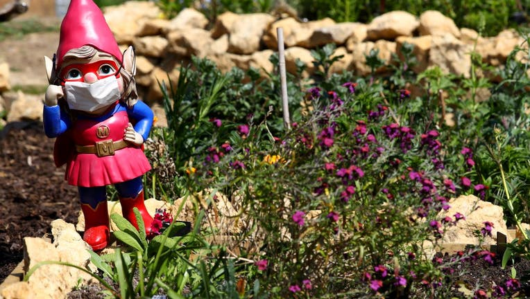 Garden gnomes wearing surgical face masks in the village of Great Houghton