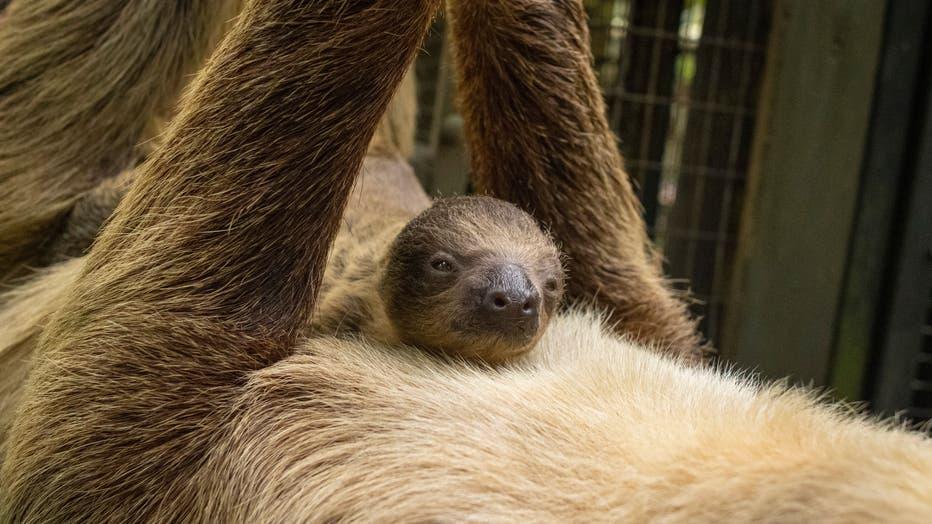3f30a2d5-sloth2.jpeg.jpg