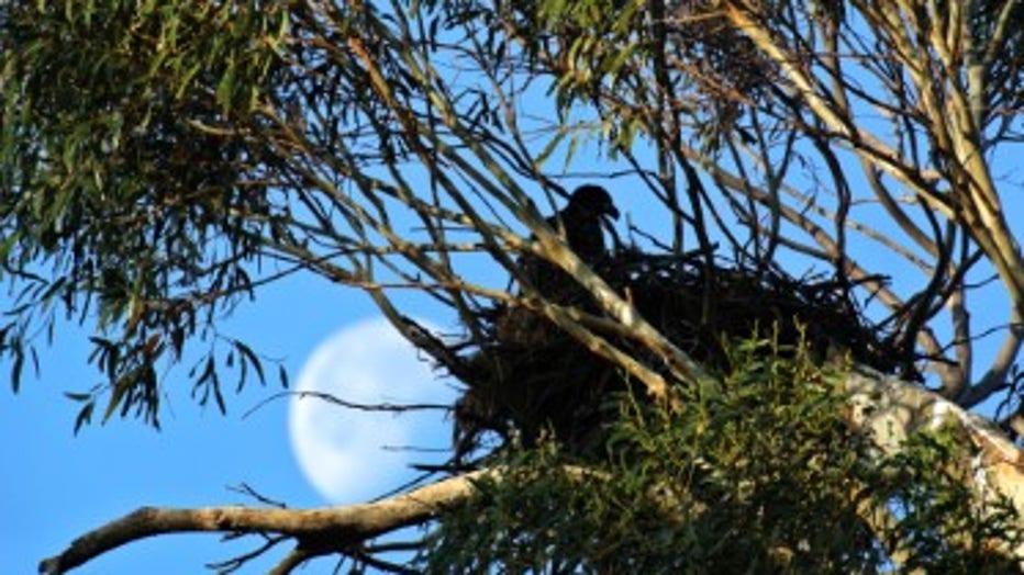 EAGLE-NEST-PHOTO-3-CREDIT-DAN-SARKA.jpg