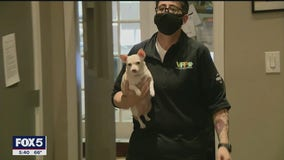 Veterinarians remain busy during pandemic