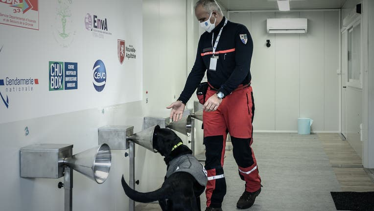 FRANCE-HEALTH-VIRUS-TESTS-DOGS