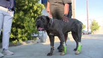 Community helps family pay medical bills for dog shot by LA County deputy