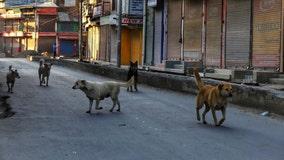 Canine coronavirus found in humans in Malaysia, study says