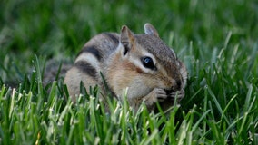 8-year-old boy hunting chipmunks accidentally shoots uncle in head