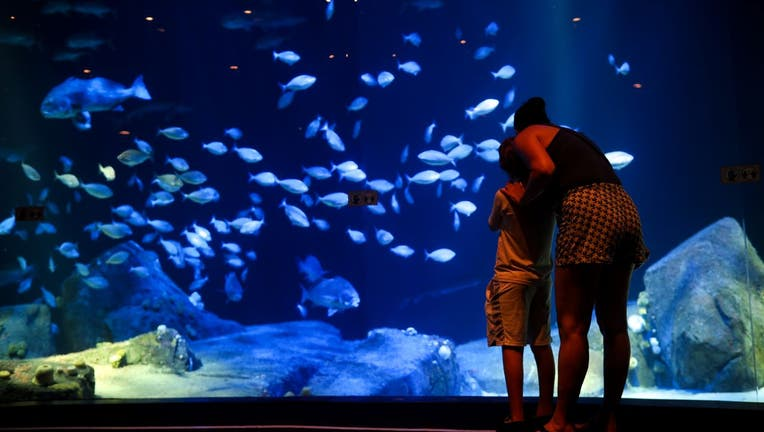 Visitors enjoy the Canyon's Edge tank, which is part of the Ocean Wonders exhibit on the first day of re-opening of the Wildlife Conservation Society New York Aquarium in Coney Island.