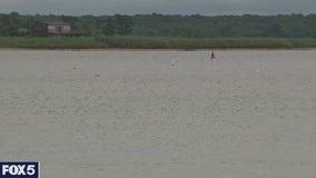 Brown tide threatens marine life off Long Island
