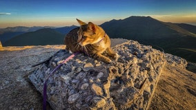 Cat and owner hike up New Hampshire's tallest mountains