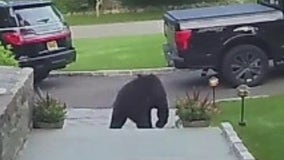 Bear sightings in Connecticut on the rise