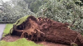Tornado takes down trees in CT with 80 mph gusts