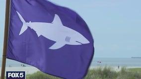 Nassau County beaches will fly shark warning flag