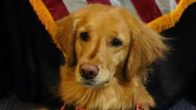 TSA names 'cutest canine' among dozens of working dogs