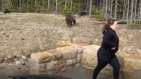 Woman faces charges for Yellowstone bear encounter