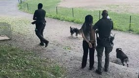 Woman arrested over unleashed dogs in NYC park