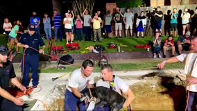 Arlington firefighters rescue deaf senior dog trapped in storm drain