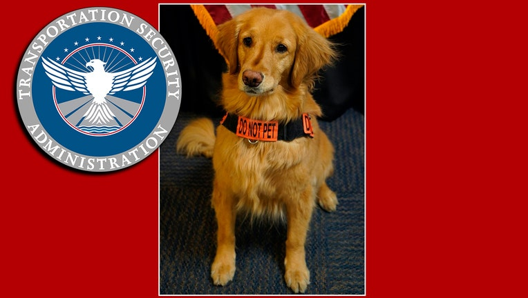 """Image of a Golden retriever wearing a harness that reads """"DO NOT PET"""" with a TSA logo and red background"""