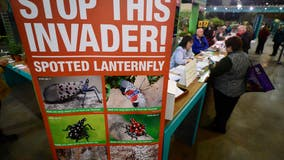 Squish on sight: State officials urging residents to kill Instagram-worthy insect