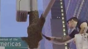 NYPD's new beekeeper removes swarm of 10,000 on first day on job