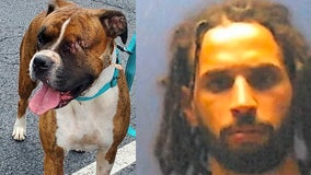 Man claims dog shot herself in the face