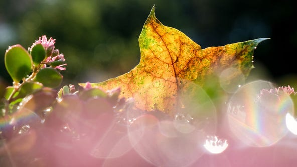 Autumnal equinox 2021: Here's when fall officially starts