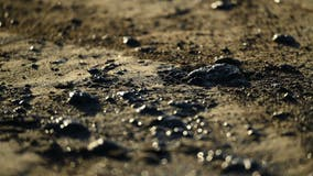 California oil spill: Wetlands may face 'ecological disaster' from pipeline failure