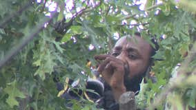 Man comes down from tree in Queens after 2 days